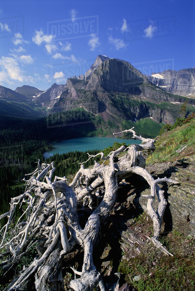 The landscape of Glacier National Park, over Grinnel Lake and the Grinnell Glacier. Mountains and snow. Dead tree trunk and branches.  Royalty-free stock photo