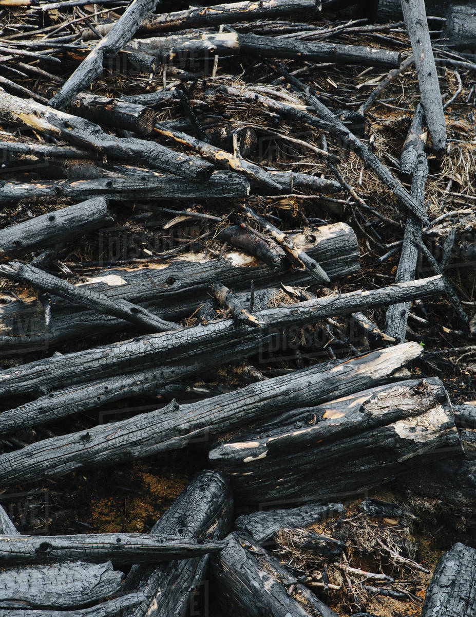 Burned logs and debris from clear cut forest, Olympic NF Royalty-free stock photo
