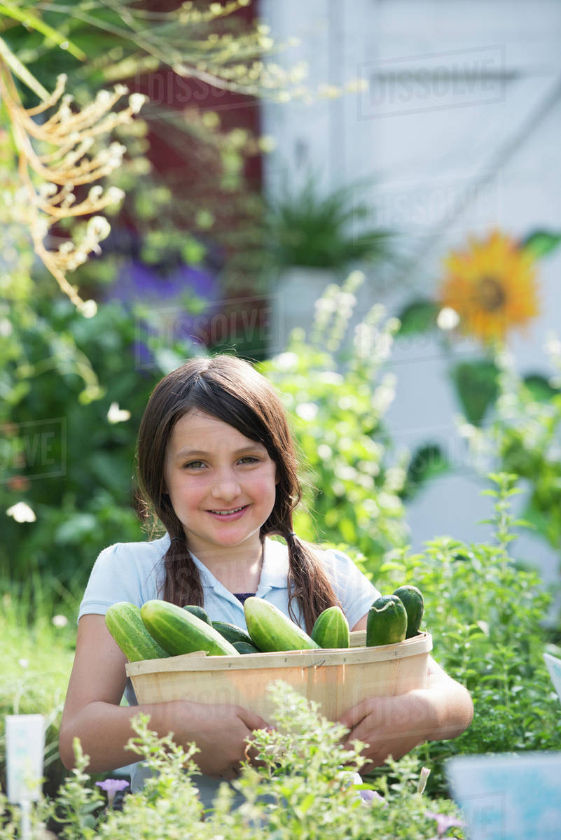 Summer on an organic farm. A girl holding a basket of fresh cucumbers. Royalty-free stock photo