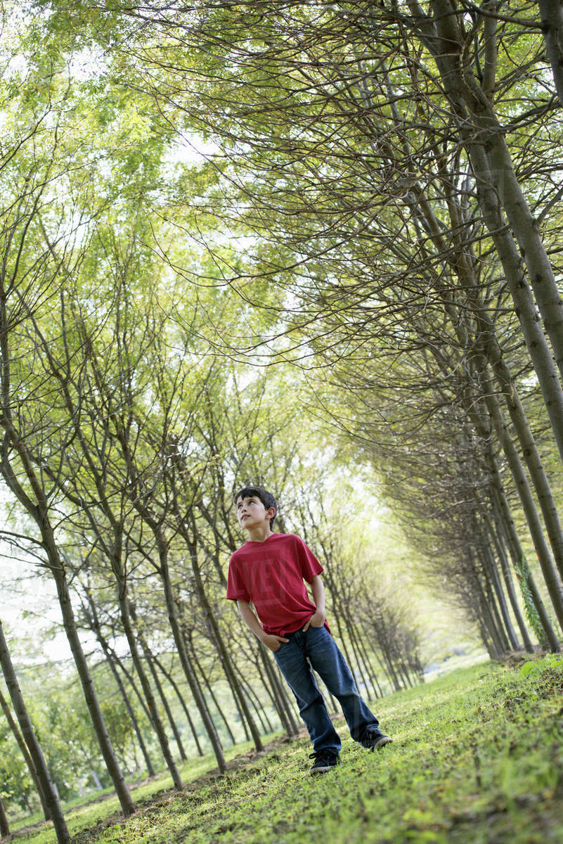 A young boy in the woodland, looking around curiously. Royalty-free stock photo