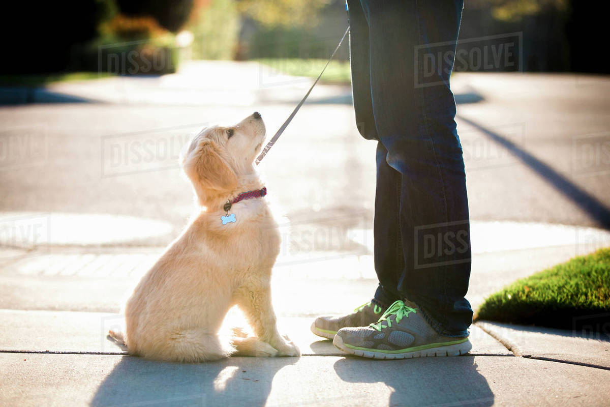 Low section of woman with puppy standing on footpath Royalty-free stock photo