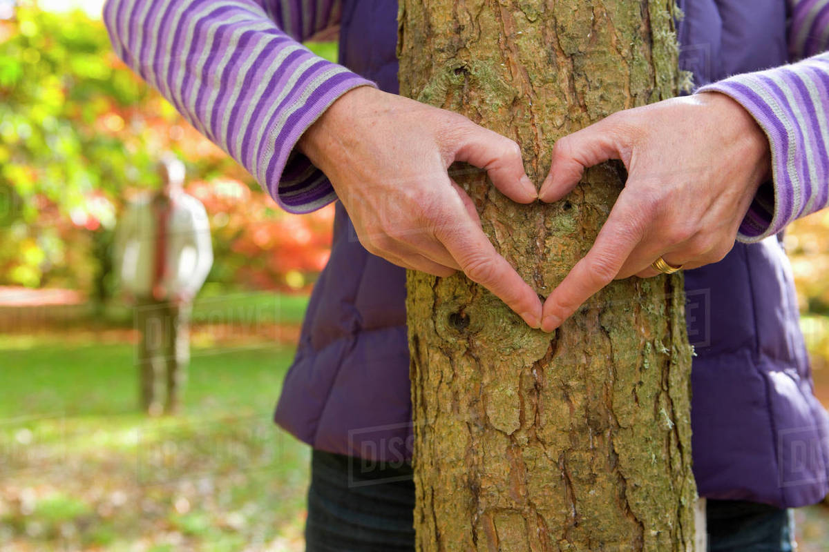 Close up of senior woman making heart-shape on tree trunk with hands Royalty-free stock photo