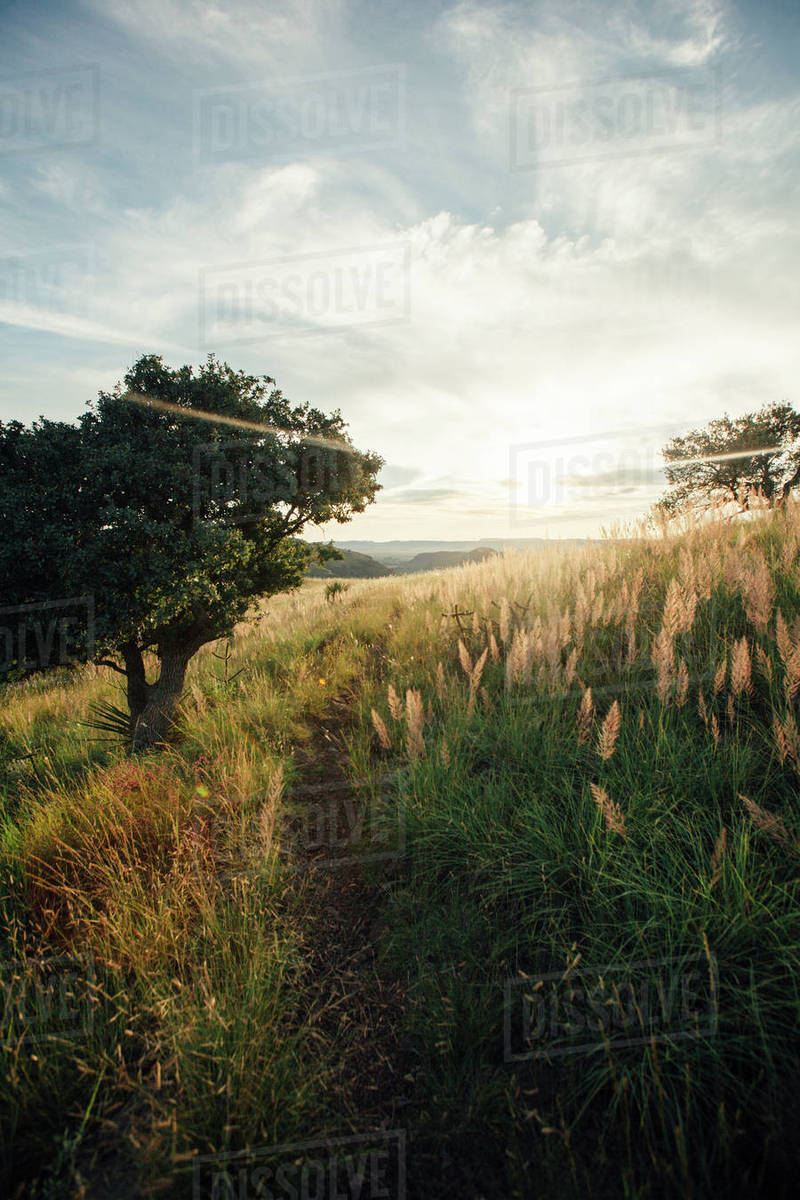 Scenic view of grass growing on field against cloudy sky at Davis Mountains State Park Royalty-free stock photo