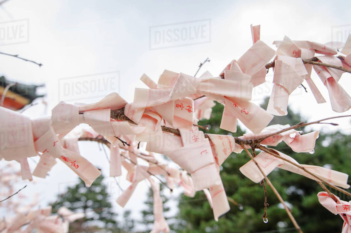 Low angle view of fortune papers tied on twigs against sky Royalty-free stock photo