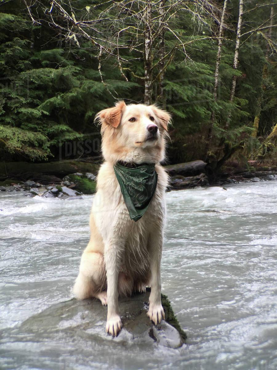 Dog sitting on rock in lake Royalty-free stock photo