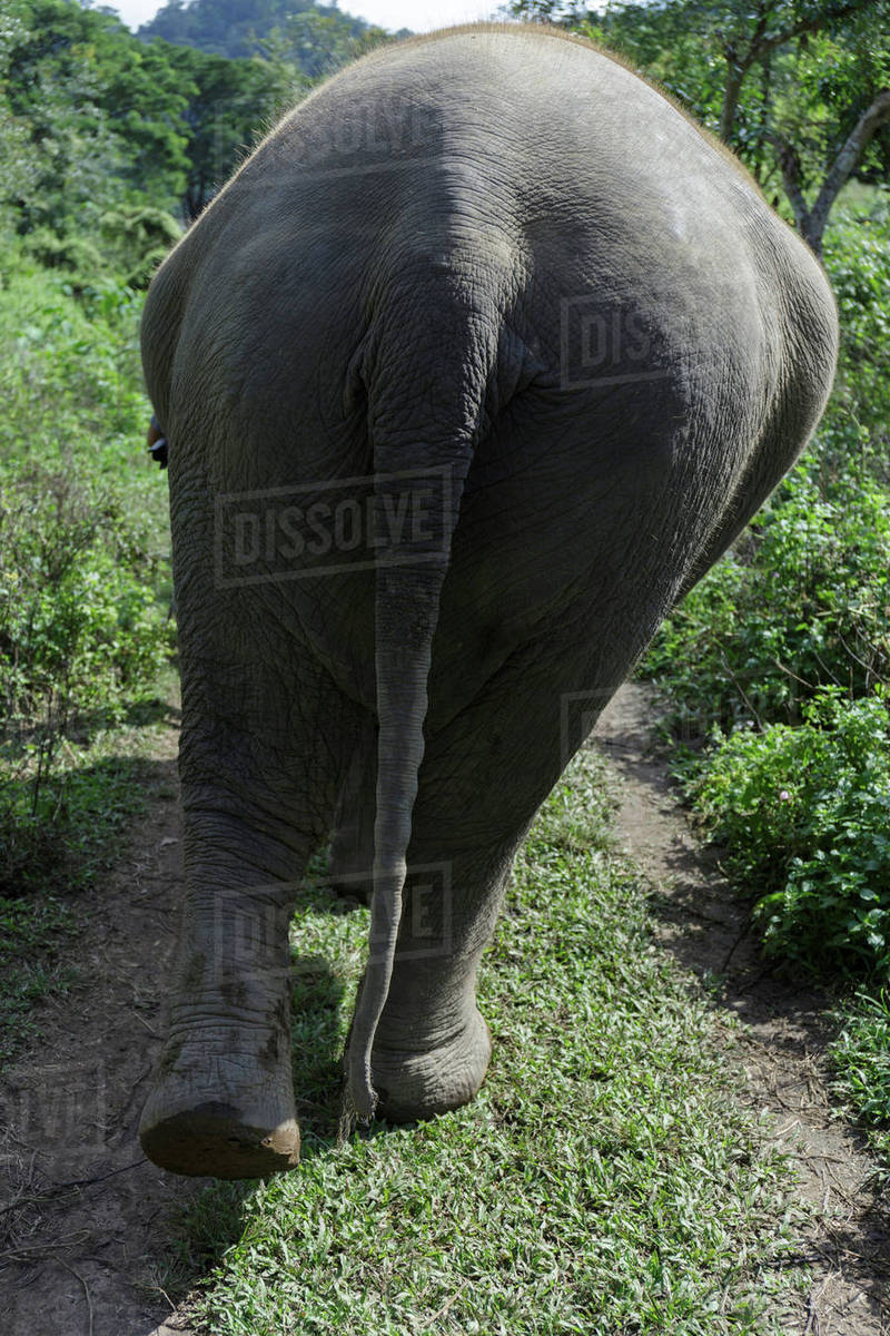 Rear view of elephant standing at field on sunny day Royalty-free stock photo