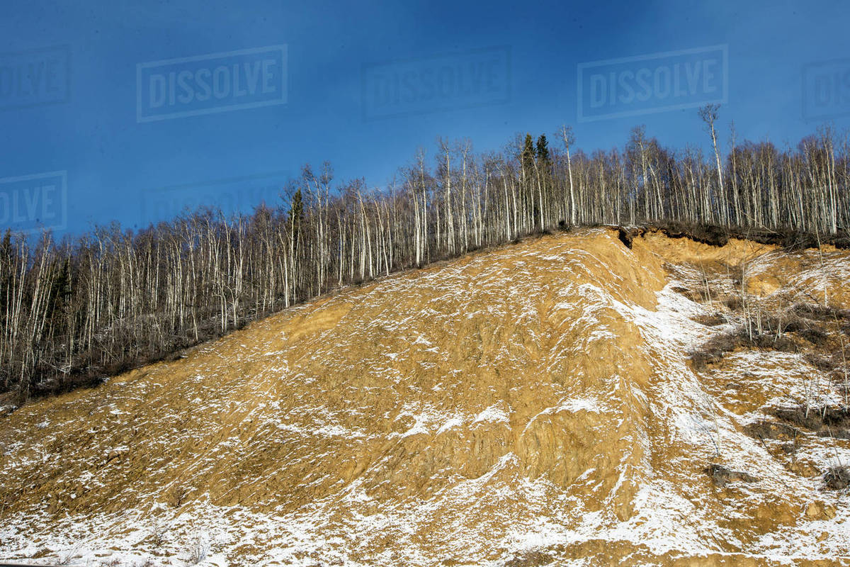 Trees growing on mountain against blue sky Royalty-free stock photo
