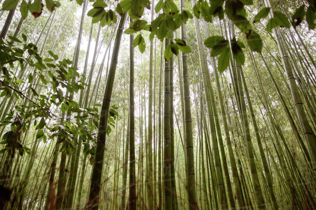 Low angle view of trees growing in forest Royalty-free stock photo
