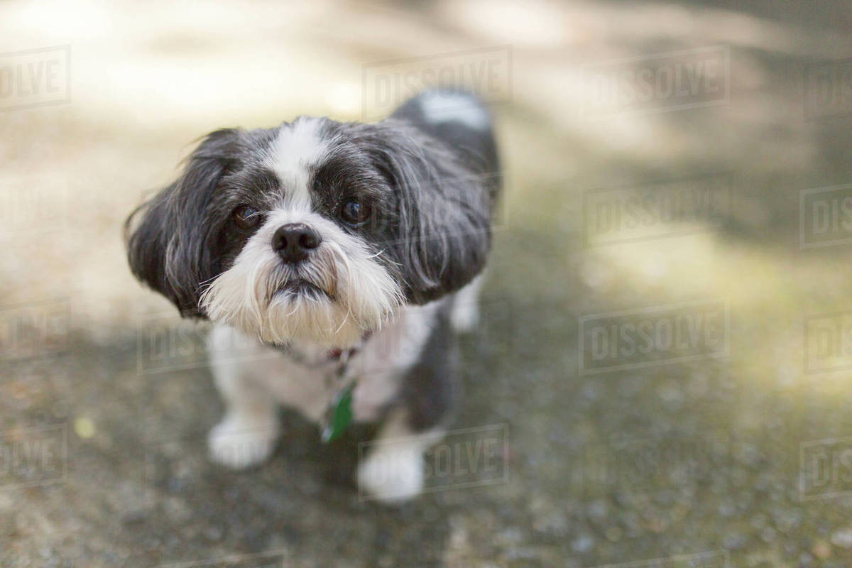 High angle portrait of dog standing on field Royalty-free stock photo