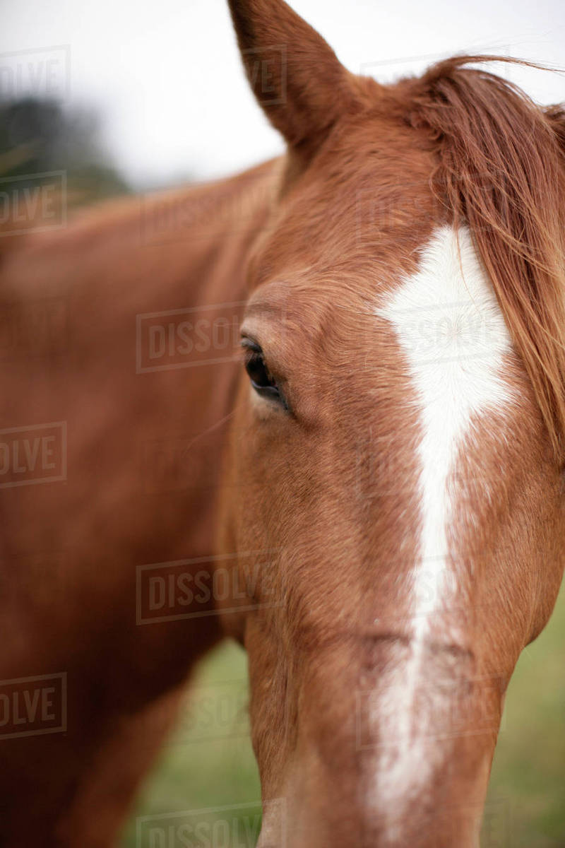 Close-up of horse on field Royalty-free stock photo
