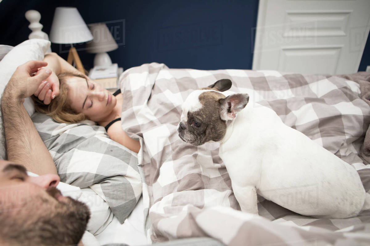 High angle view of couple relaxing on bed with French bulldog at home Royalty-free stock photo
