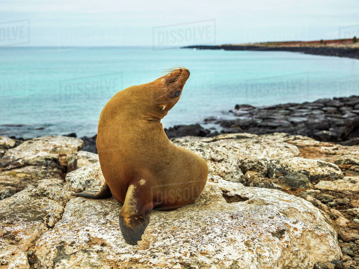 Seal on rocky shore against sky Royalty-free stock photo