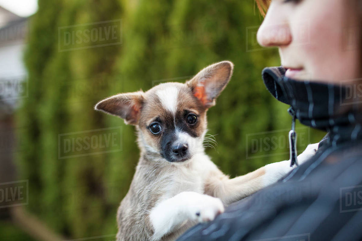 Cropped woman with dog in park Royalty-free stock photo