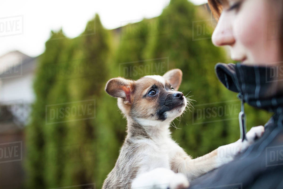 Cropped smiling woman with dog in park Royalty-free stock photo