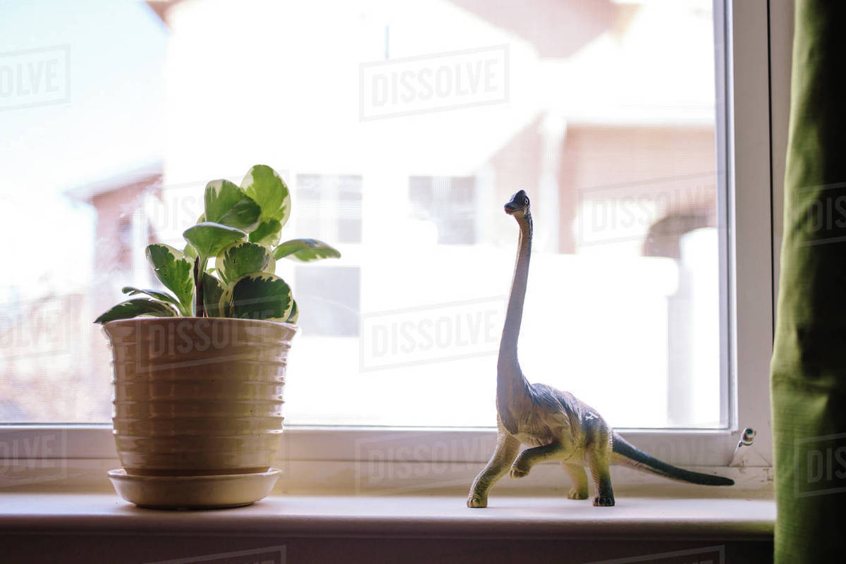 Toy dinosaur and potted plant on window sill Royalty-free stock photo