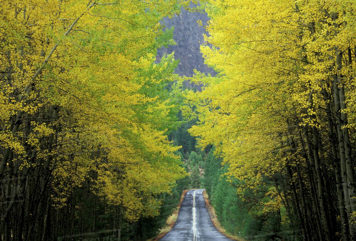 NA, USA, Washington, near White Pass. Teaton River Road with trees ...