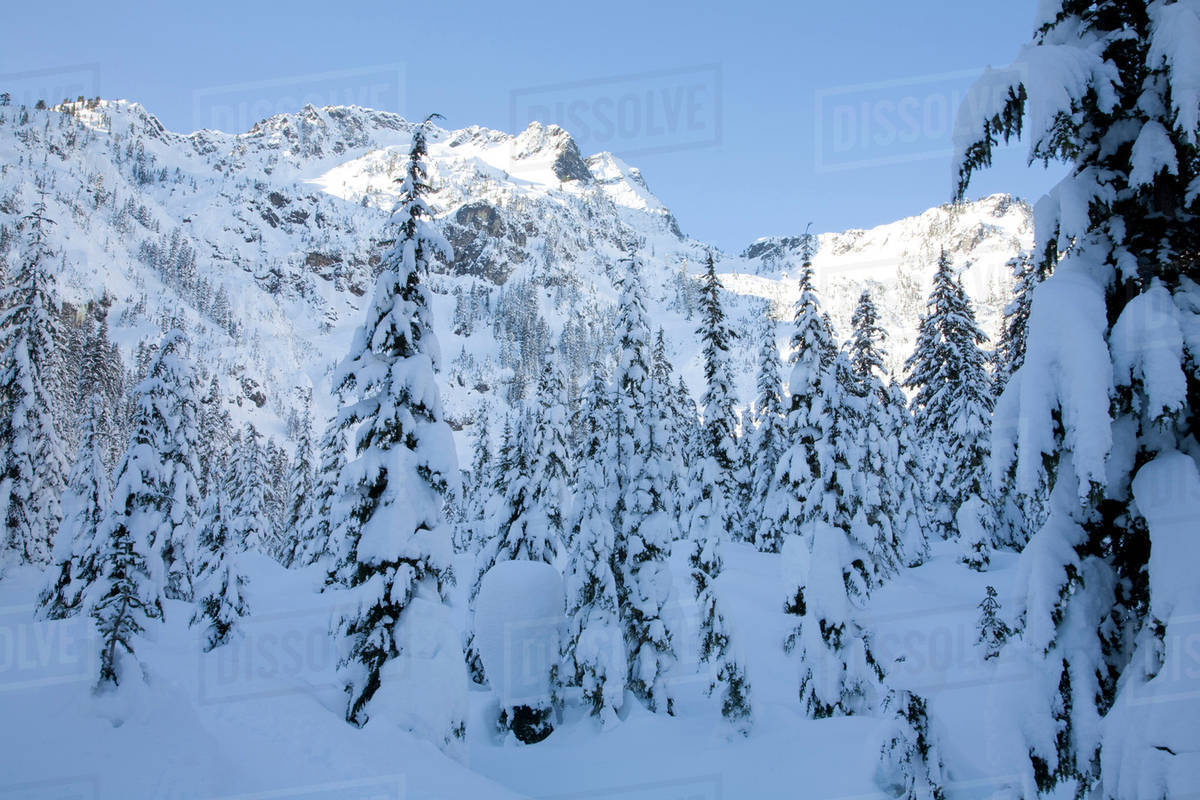 Wa mt baker snoqualmie national forest alpental valley for Chair 6 mt baker