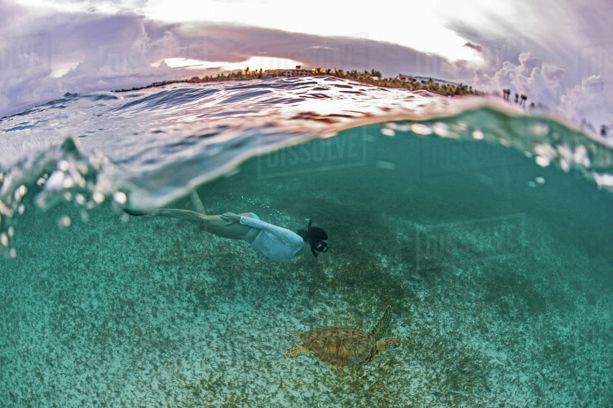 Snorkeler gets close to sea turtle in the shallows of Akumal Bay at sunset, Mexico Royalty-free stock photo