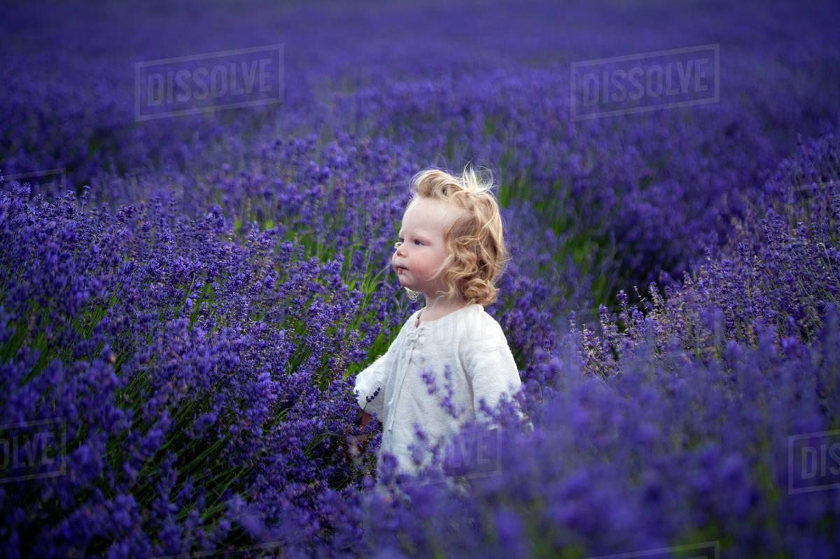Boy walking in field of lavender Royalty-free stock photo